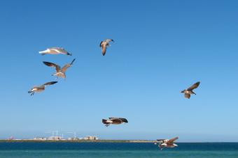 Sergio Lagos es el primer Embajador de las aves playeras