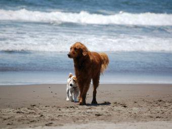 Prohibición de perros en ciertas playas de Chile enciende la polémica