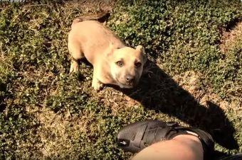 Ciclista encuentra cachorrito abandonado en medio de la nada, y mira lo que pasa