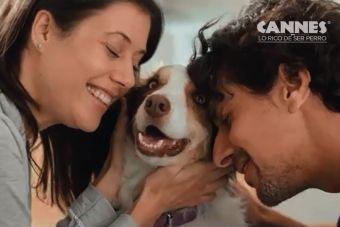 12 Consejos Cannes para tener perros saludables