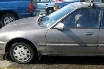 Dos jóvenes fueron detenidos por dejar a perros dentro de un auto en España
