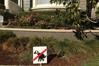 ¿Por qué es importante recoger la caca de tus perros?