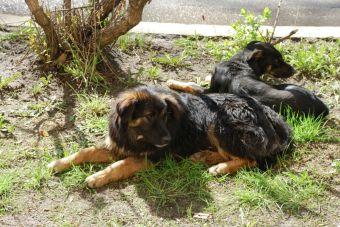 Un pueblo argentino donde hay más perros que personas