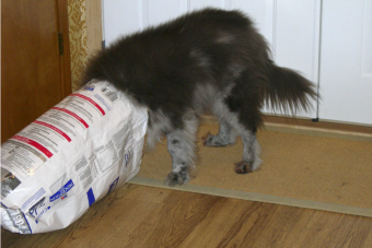 Comederos automáticos te permiten alimentar a tu mascota desde lejos