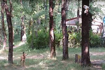 Video: Gato escapa de feroz ataque