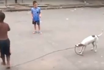 Perrito es parte de la pandilla y juega como uno más (video)