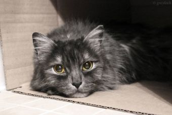 Animalistas chinos salvaron a 1.000 gatos que iban a un matadero