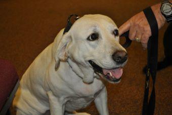 Dos perros de la aduana desbarataron banda de narcotraficantes