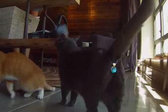 Twinkle Tush, una nuevo accesorio para tu gato