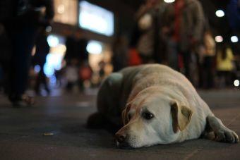 En Perú multarán a quien abandone a su perro en la calle