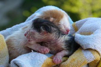 Como criar gatitos recién nacidos