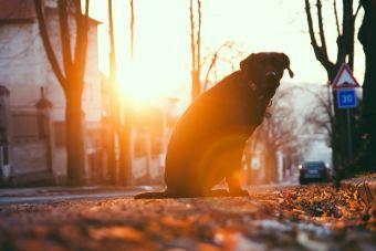 Darle un hogar a un perro adoptado: mitos que destruir