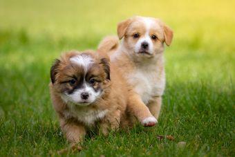 ¿Cómo cuidar correctamente a tu cachorro ?