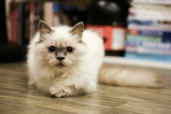 Consejos para educar gatitos
