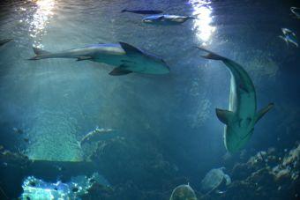 ¿Qué sabemos de los tiburones?