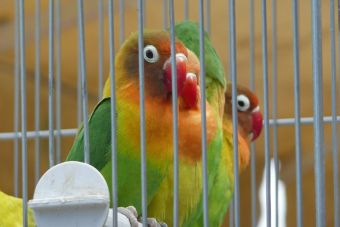 ¿Cómo tratar el estrés de tu ave?
