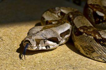 ¿Qué serpientes podemos criar en cautiverio?