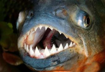 Top 10: Los peces más temibles del mundo