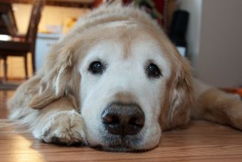 3 consejos que debes tener en cuenta para superar la muerte de tu mascota