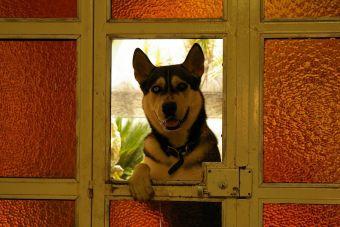 Ansiedad por separación: cuando los animales se quedan solos en casa