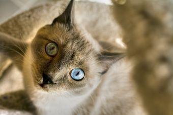 10 Videos de Gatos sorprendentes