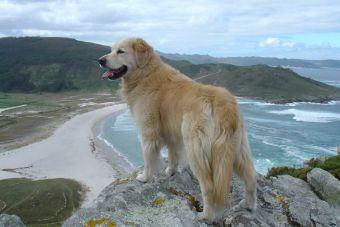 Las 12 mejores razas de perros para convivir en familia