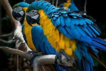 8 características propias de las aves que solo las conocen sus dueños