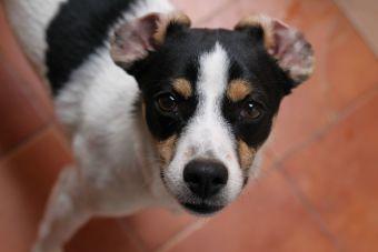 Los 7 perros que forman parte de la Historia de Chile