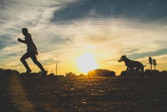 Los mejores lugares para pasear a tu perro en Valdivia