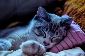 7 Videos que te motivarán a tener un Gato como mascota