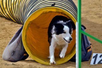 Guía para hacer nuestro propio campo de entrenamiento canino en casa
