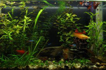 Consideraciones para tener un acuario en casa