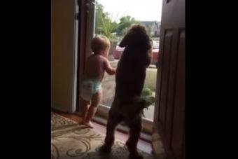 Video Viral: Perro e hijo reciben al dueño de casa