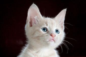5 consejos para quienes crian un gato por primera vez