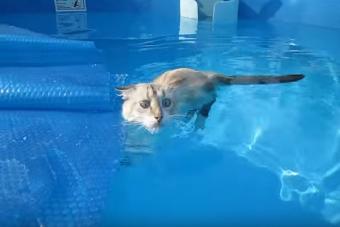 3 videos de gatos graciosos en la piscina