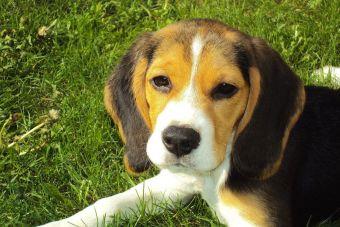 5 cualidades de mi perro que mi mejor amigo no posee