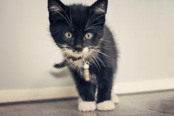 5 cosas que aprendí al tener una mascota