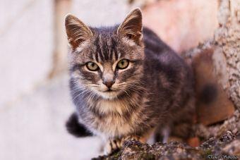 Te mostramos los 4 gatos más traviesos de Youtube