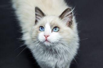 6 expresiones geniales que los gatos hacen