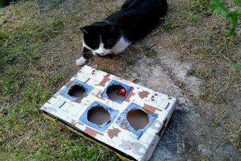 Aprende cómo hacer un divertido juguete para tu gato