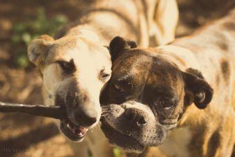 5 juegos para entretener a tu perro cuando no estás en casa