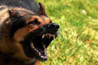 Como solucionar la agresividad de nuestros perros.