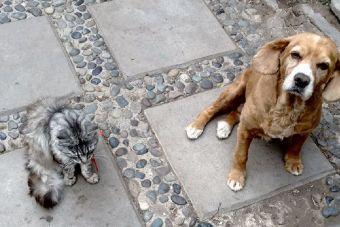 Como sociabilizar a gatos y perros para vivir juntos