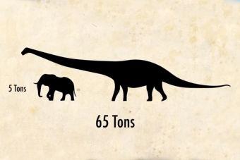Animales que no creerás que existieron: Dreadnoughtus, el más grande dinosaurio