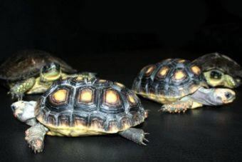 Historias de Rescate: como me inicié en el rescate de tortugas