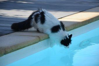 7 GIFS divertidos de gatos en verano