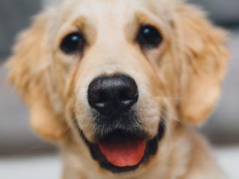 7 características de todo fanático de perros
