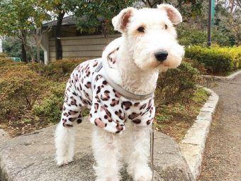 7 Fox Terriers que te llenarán de ternura