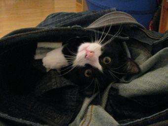 Top 5 de Videos de Gatos Intrusos y traviesos