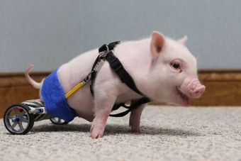 5 videos de animalitos discapacitados que te harán amar la vida